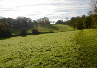 Thumbnail for the post titled: Basildon Council Welcome SSSI Status for Langdon Ridge